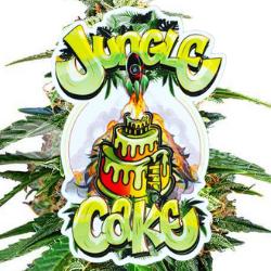 Jungle Cake Seeds JUNGLE BOYS MARIJUANNA