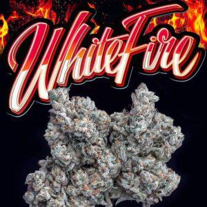 WHITE FIRE JUNGLE BOYS MARIJUANNA
