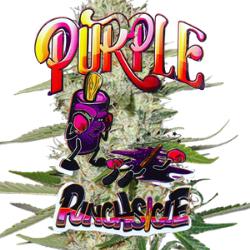 Purple Punchsicle Seeds