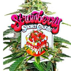 Strawberry Shortcake Seeds SEED